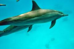 Delphin56