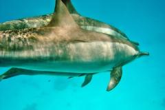 Delphin30