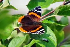 DSC_1758a (Copy)