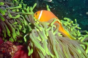 Unterwasser Malediven